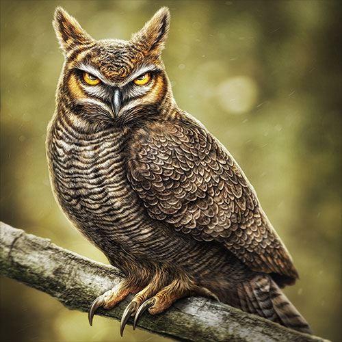 Illustration of an intense looking Great Horned Owl shown perched in a branch.