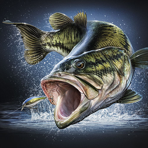 Illustration of a Largemouth Bass leaping after a lure.