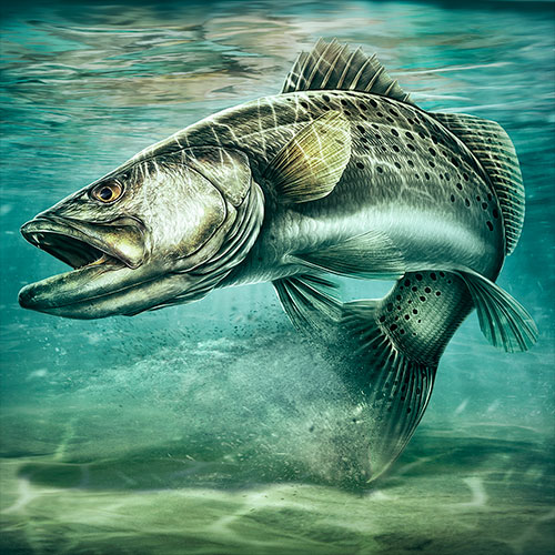 Illustration of a Spotted Sea Bass in shallow coastal waters.